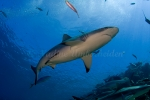 Fiji-Sep-2008_009.jpg
