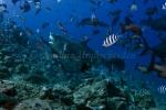 Fiji-Sep-2008_023.jpg