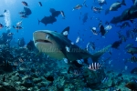 Fiji-Sep-2008_024.jpg