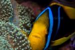 Fiji-Sep-2008_045.jpg