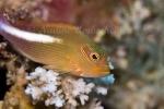 Fiji-Sep-2008_065.jpg