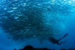 Malpelo-Coco-Island-Mai-2008_005.jpg